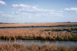 marsh, vegetation, summer, wetlands