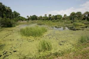 marais, zones humides, paysage, nature, scénique