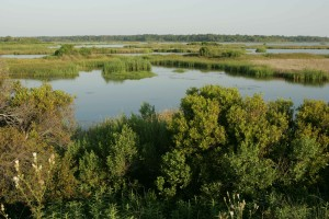 marécages, marais, nature, habitat