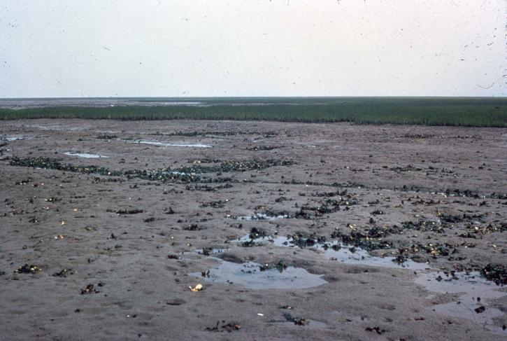 boue, plat, les zones humides