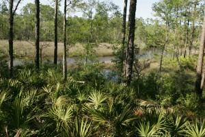 one, beautiful, scenes, swamp