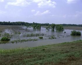panthère, marais, désert, refuge, Mississippi