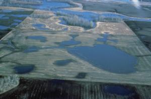 prairie, nids de poule, des zones humides