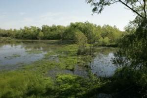 refuge, marshland, habitat, numerous