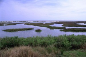 salt marsh, ocean, background, white, barrier, between, green, plant