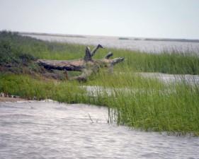 Salt marsh, chronione, ocean, naprzeciwko wyspy