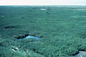 salt marsh, wetland