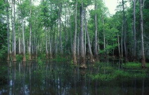 Scenic, cypress, sump, bottomland
