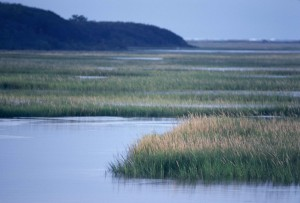 scenic, salt marsh, wetlands, Spartina, grass, savanna