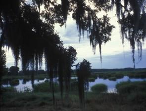 pittoresque, espagnol, mousse, couvert, arbres, zone humide, côtier, Caroline