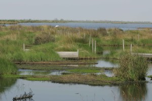 sediment, fencing, help, rebuild, marsh