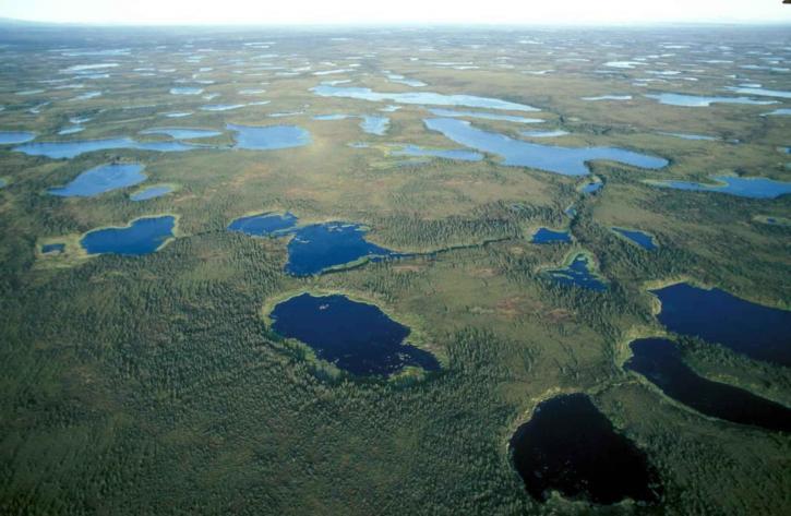 Selawik, menedéket, vizes élőhelyek