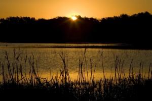 zachód słońca, drzew, terenów podmokłych, wody, roślin