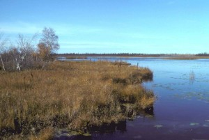 swamp, river, flats, scenic, view