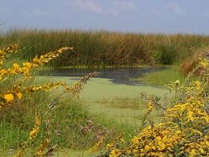 pântano, paisagem