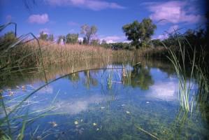 болото, пейзаж, scenics