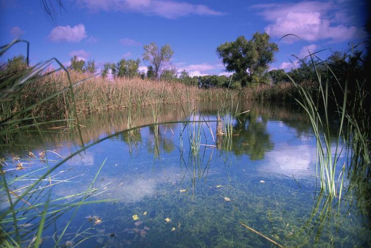Bagno, krajobraz, pejzaż