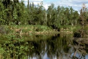 bảo tồn thiên nhiên, đầm lầy,
