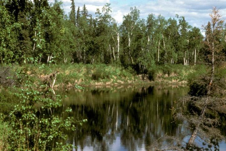 reserva natural, pântano,
