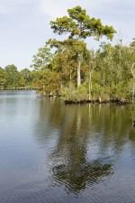 swamp, scenery