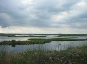 marais, scénique, le balbuzard pêcheur, nid, fond