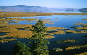 đầm lầy, scenics, thảm thực vật