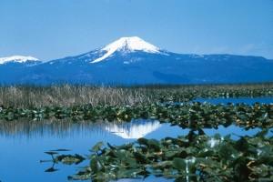 swamp, vegetation, close