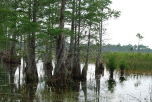 swamp, vegetation, plants