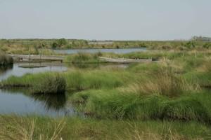 swamp, water, landcape, beautiful, purposeful