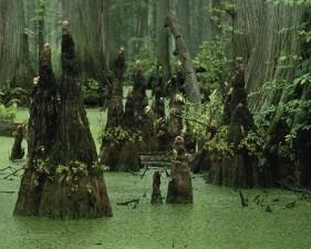 marais, eau, paysage