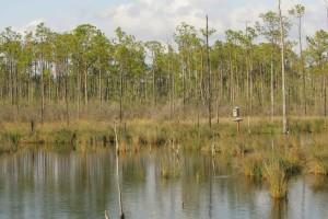bažina, vodu, lesy, okraje