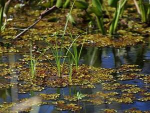swamps, lake