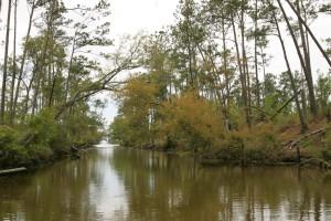árboles, línea, paso, agua, pacífico, Slough