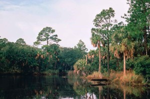 tropical, wetland, scenic