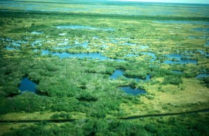 tundra, summer, aerial perspective