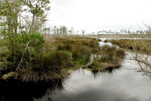 unspoiled, marsh, land