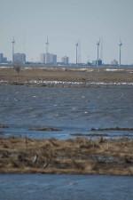mokraďové oblasti, päť, veterné turbíny, panorámu mesta, pozadí