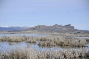wetlands, Tule, lake, wilderness, refuge, dotted, migratory, birds