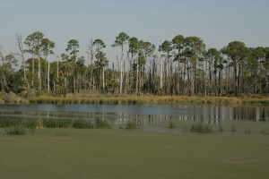 wetland, algae, pines, palms