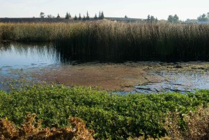 wetlands, aquatic, environments, vegetation