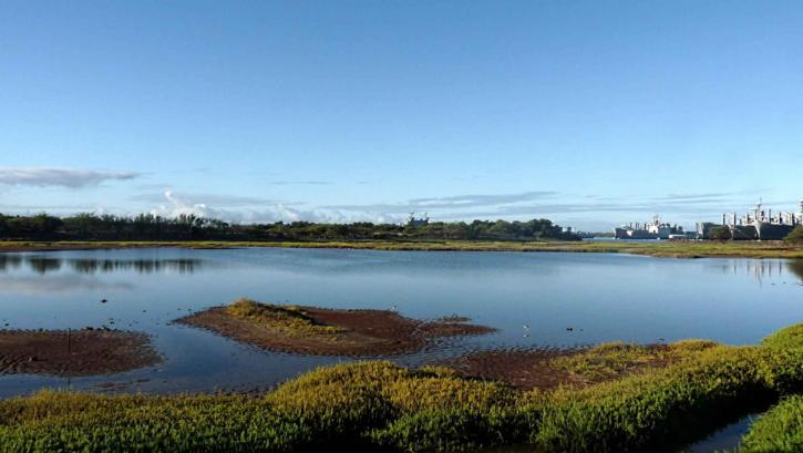 waiawa, wetland, pearl, harbor