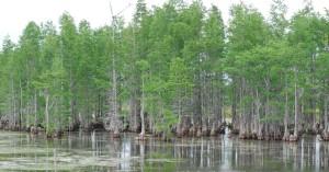 wetland, aquatic, environment, habitat