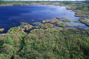 wetland area, shallow water, land