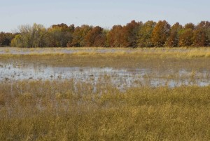 wetland, filled, water, plants, autumn, trees, background, ducks, flight