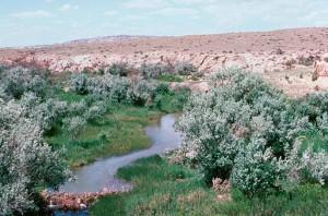 wetland, spring, habitat