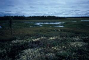zones humides, paysage, crépuscule