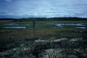 zones humides, paysage, aube