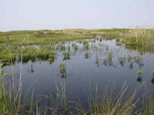 zones humides, non, île, nantucket