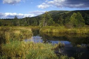 wetland, scene, nature, mountains