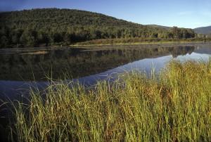 wetland, scene, Catskills, region, York